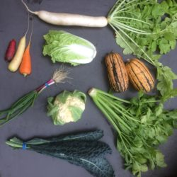 October CSA Share - cauliflower, delicata squash, celery, rainbow carrots, scallions, daikon radish, napa cabbage, kale