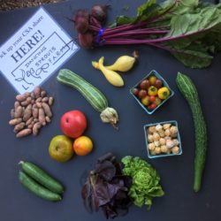 September CSA Share - zucchini, cucumber, mini head lettuce, beets, fingerling potatoes, cherry tomatoes, husk cherries