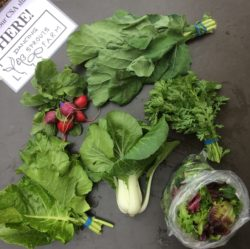 June CSA Share: Bok Choi, Radishes, Salad Mix, Chrysanthemum Greens, Collards, Kale